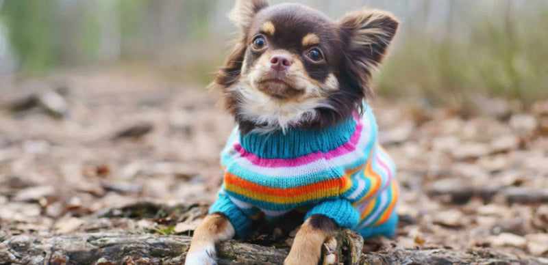Sweaters On For Your Dogs! Get Your 15% Off This Autumn 2019