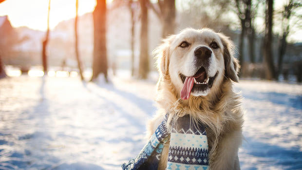 Cold Weather Blues: Winter Season Tips For Dog Care