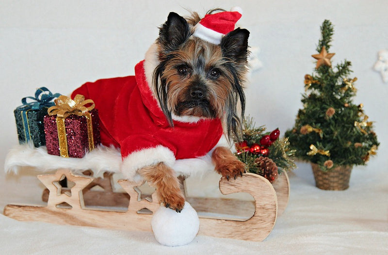 Ho Ho Ho! 10 Festive Dog Costumes And Clothes For Christmas 2018 & 2019