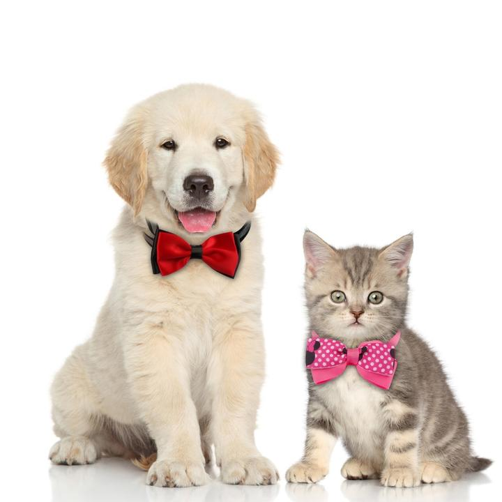 One Pack Adjustable Bow Tie For Your Adorable Pets
