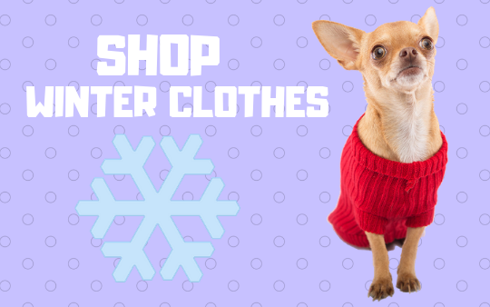 Shop Winter Clothes for Dogs