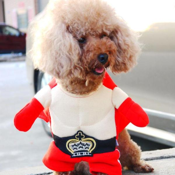 Boxing Funny Standing Costume Red Shorts Red Gloves for Dog - Woof Apparel