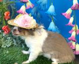 Hawaiian Style Adorable Floral Design Dog Hat For Summer - Woof Apparel