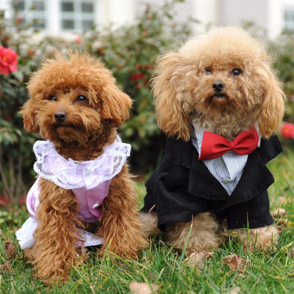 Gentleman Wedding Dress Costume For Dogs – Woof Apparel
