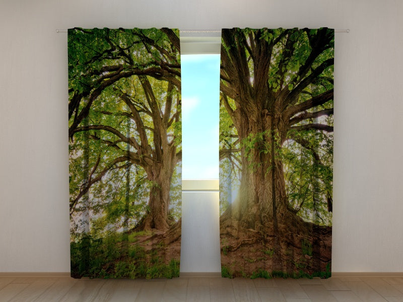 Photo Curtain Beautiful Old Trees