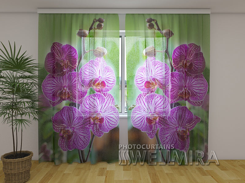 Photocurtain Babylon Orchid - Wellmira