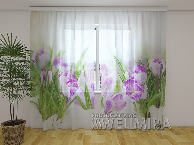 Photo Net Curtain Crocuses on Snow - Wellmira