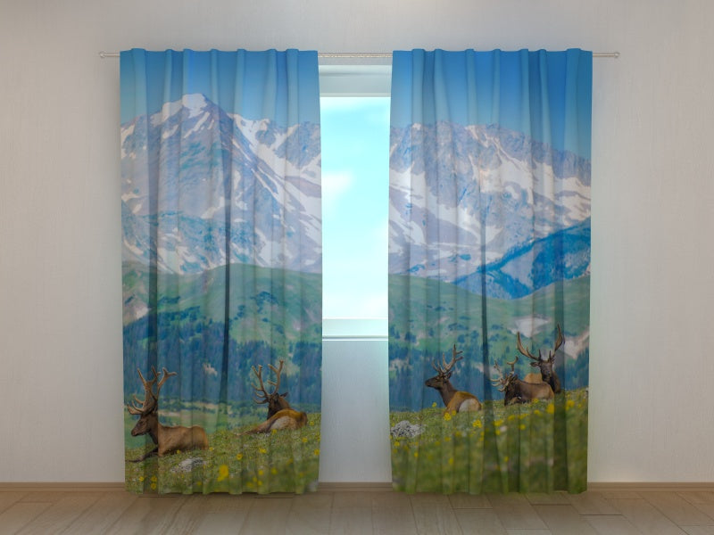 Photocurtain North Elks in the Rocky Mountain Meadow - Wellmira