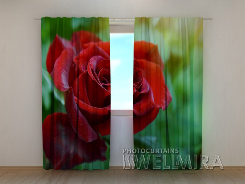 Photocurtain First Rose - Wellmira