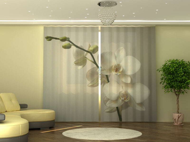 Photo-curtain Riga Orchid W290xH245 cm
