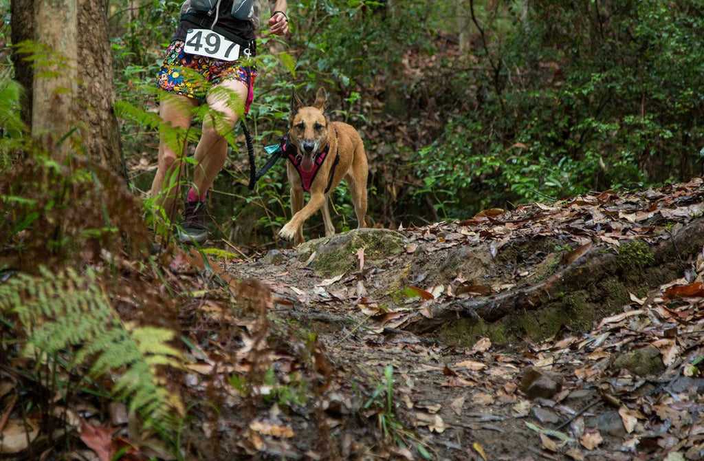 Riverwood Downs Trail Run presented by Tail Runner