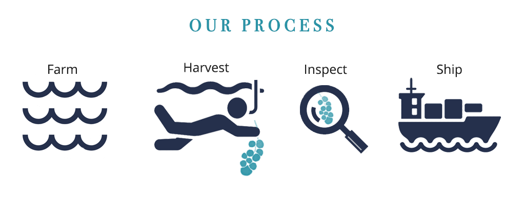 Sea Grapes Farming Process