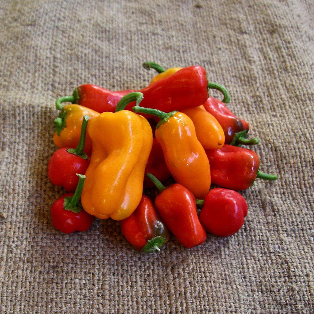 Mini Sweet Capsicums - 250g