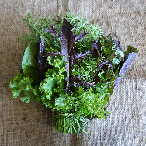 Mustard Greens - bunch