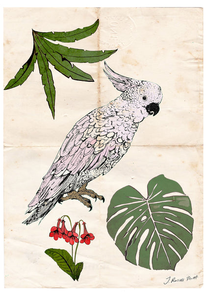 "Signed Print/ ""The Parrot & the Palm"""