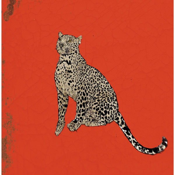 "Limited Edition Print / ""A Sitting Leopard"""