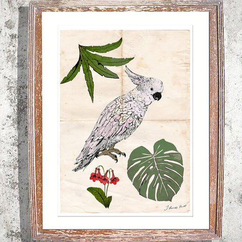 "Signed Print / ""The Parrot & the Palm"""