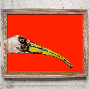 "Signed Print / ""The Nosy Stork"""
