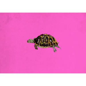 "Limited Edition Print/""The Little Tortoise"""