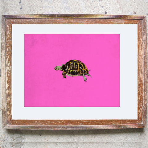 "Signed Print / ""The Little Tortoise"""