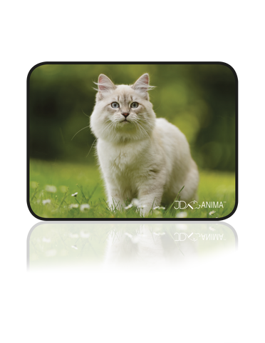 WHITE CAT PLACEMATS|TAPIS DE REPAS CHAT BLANC