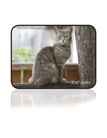GREY CAT PLACEMATS|TAPIS DE REPAS CHAT GRIS