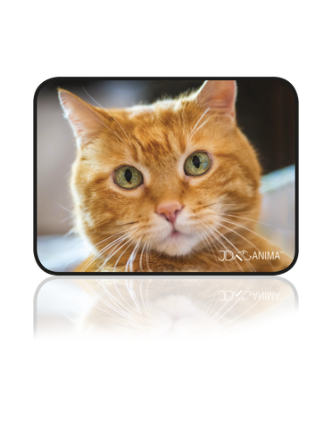 RED CAT PLACEMATS|TAPIS DE REPAS CHAT ROUX