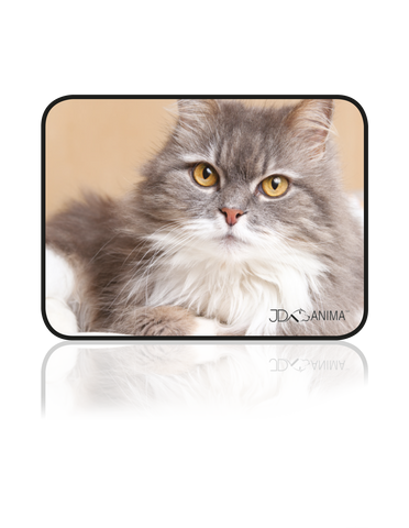 PERSIAN CAT PLACEMATS|TAPIS DE REPAS CHAT PERSAN