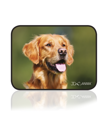 RED GOLDEN RETRIEVER PLACEMATS|TAPIS DE REPAS GOLDEN RETRIEVER ROUX