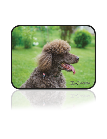 ROYAL POODLE PLACEMATS|TAPIS DE REPAS CANICHE ROYAL