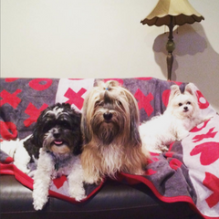 Chappywrap blankets and throws red xoxo valentines day blanket dog blanket