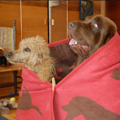 red and brown dog blanket by chappywrap blankets and throws couch throw, bed topper and more