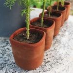 Cylindrical Square Planters : Set of 5