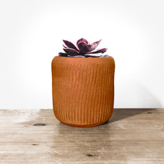 Planters : CLAWED : Decorative Terracotta Planter - 3pcs