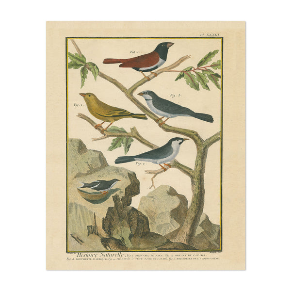 Canada Animals Birds Feathers Drawing Art Print