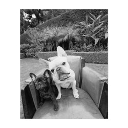 Bulldog Dog Bull Puppy Friends Photo Art Print