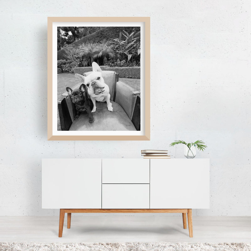 Bulldog Dog Bull Puppy Friends Photo Framed Art Print