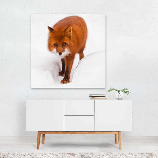 Animals Canidae Carnivore Dhole Fox Canvas