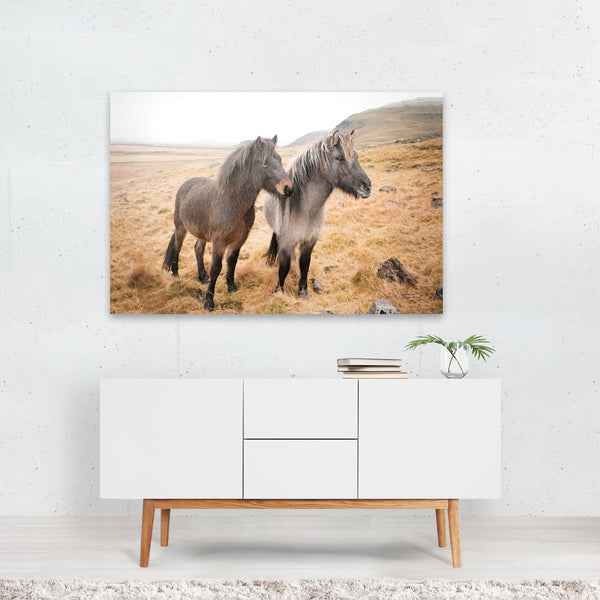 Iceland Animals Horse Friends Photo Art Print