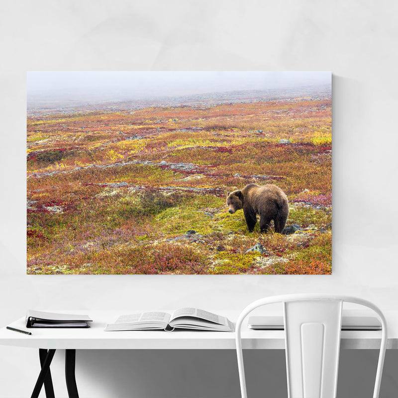 Grizzly Bear Yukon Canada Animal Metal Art Print