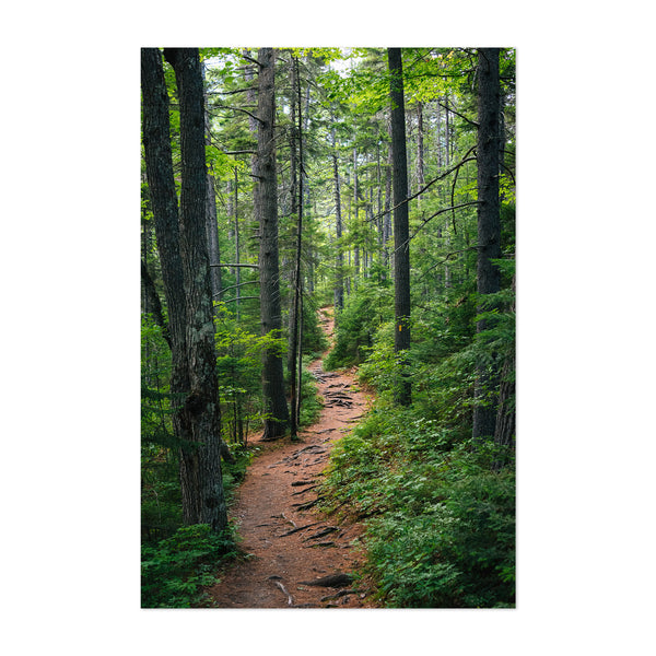 New Hampshire Forest Trail Woods Art Print