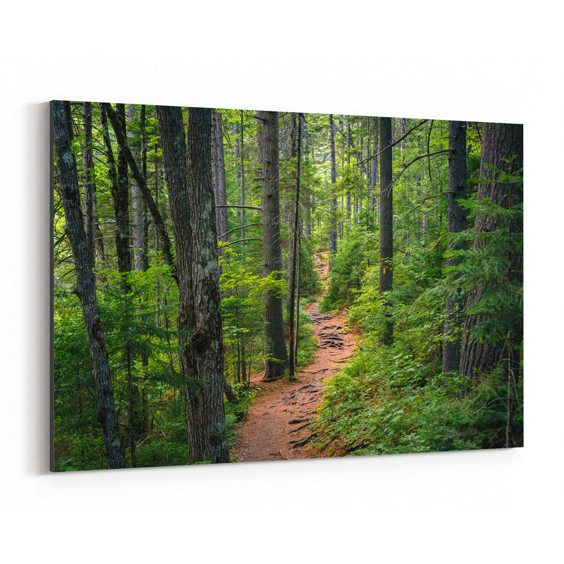White Mountains Trail in Woods Canvas Art Print
