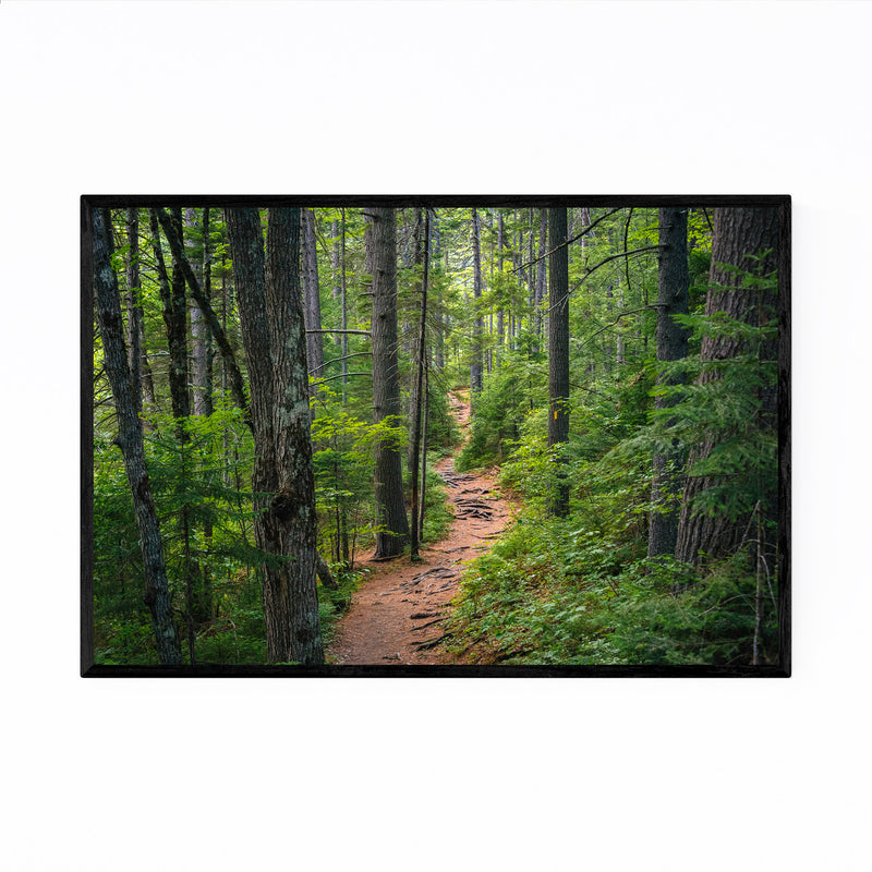 White Mountains Trail in Woods Framed Art Print