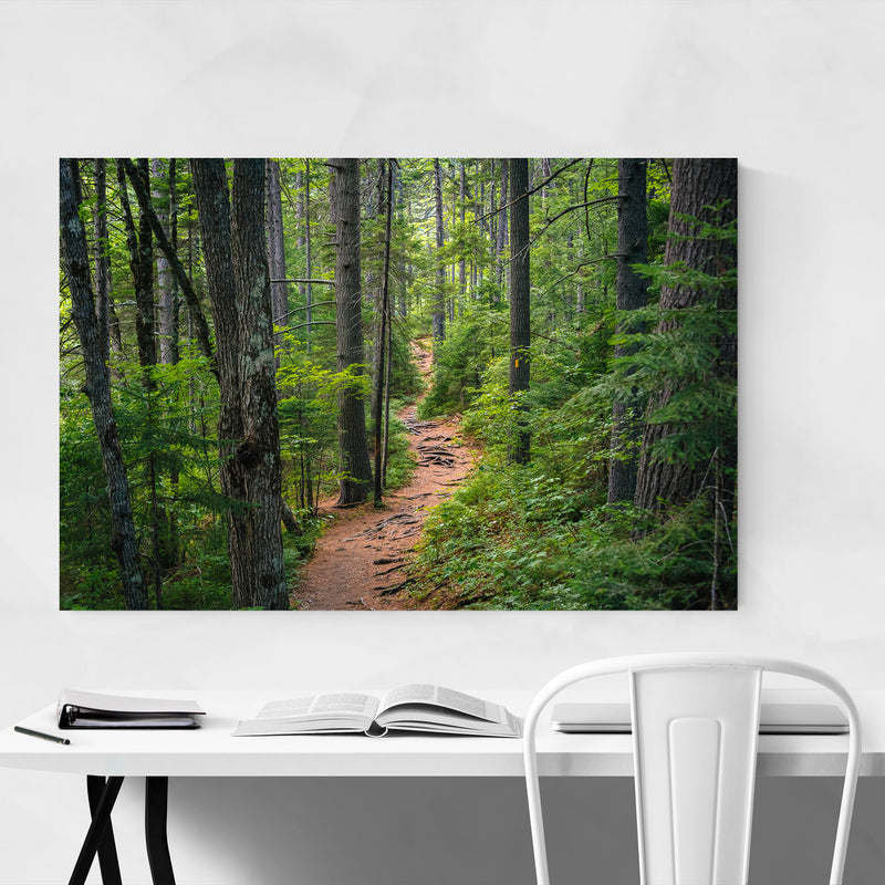 White Mountains Trail in Woods Metal Art Print