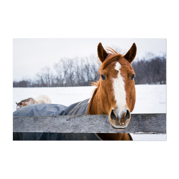 Horse on Farm in Snow Winter Art Print