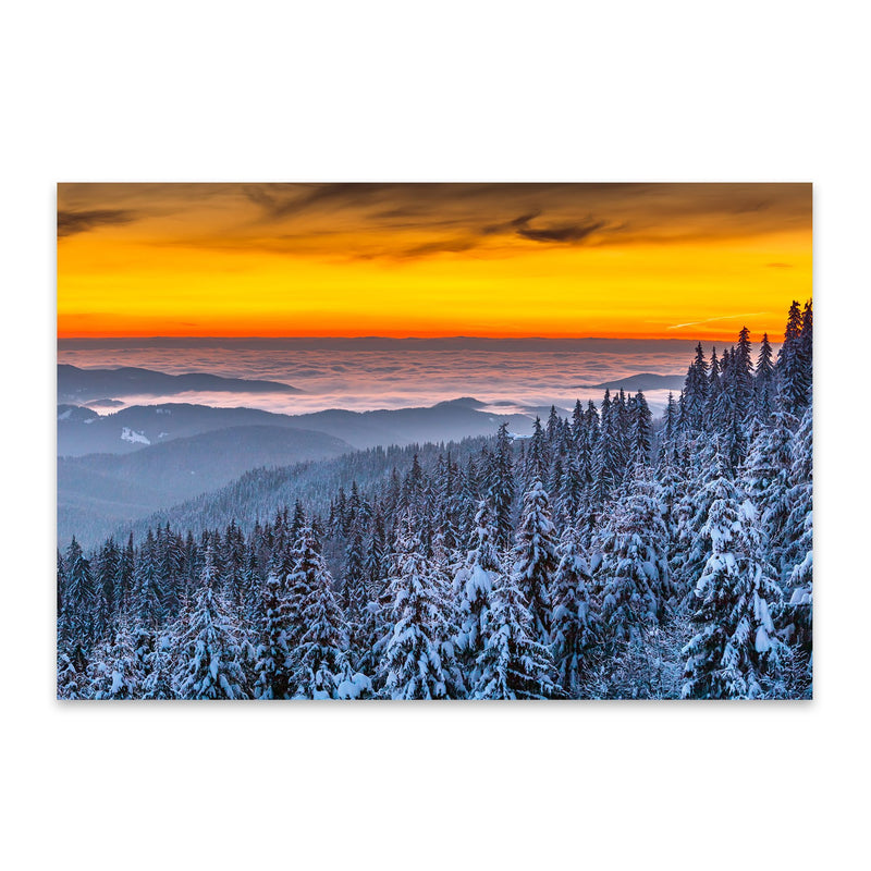 Bulgaria Pine Forest Snow Nature Metal Art Print