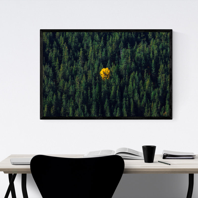 Bulgaria Autumn Forest Nature Framed Art Print