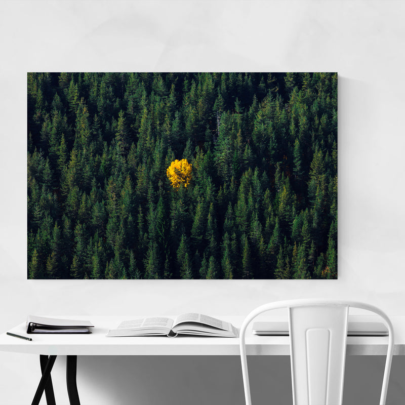 Bulgaria Autumn Forest Nature Metal Art Print