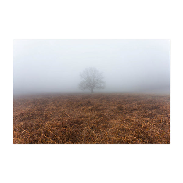 Lone Tree Foggy Day London UK Art Print