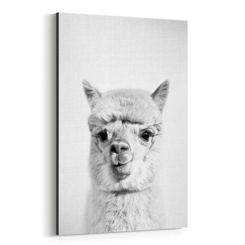 Nursery Alpaca Peekaboo Animal Canvas Art Print